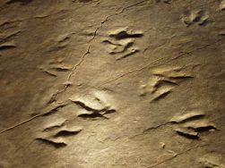 tracefossilfootprints
